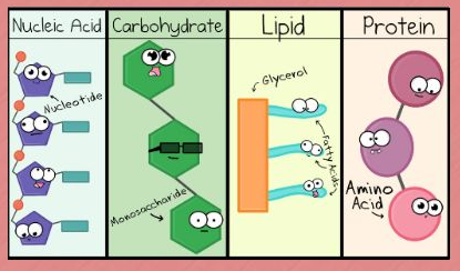 Meet the Macromolecules