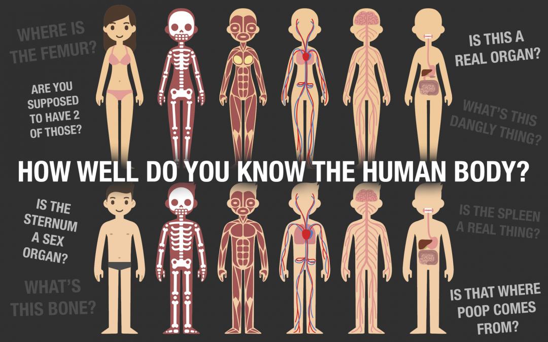 Basic Anatomy and Homeostasis