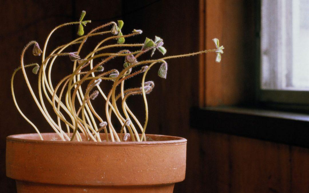 Plant Propagation, Hormones and Tropisms