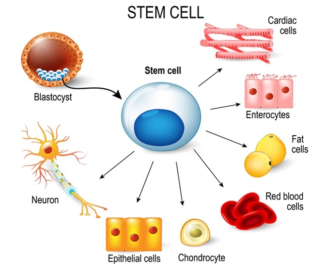 Stem Cells and Disease