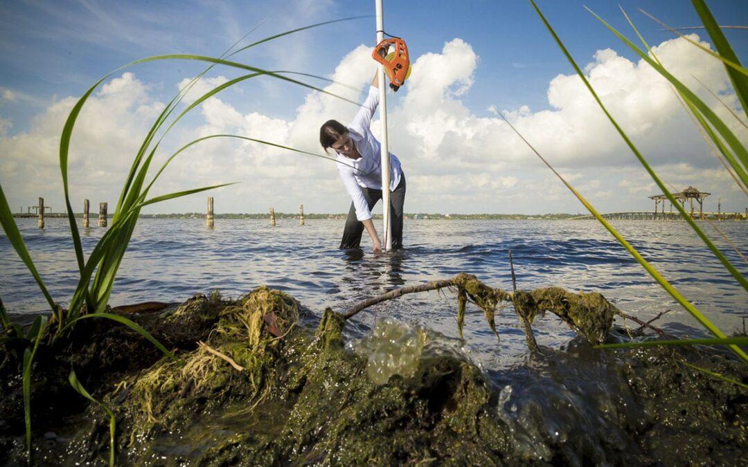 Aquatic Ecosystems – Part B