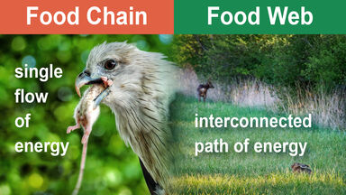 Food Chain Assignment and Post