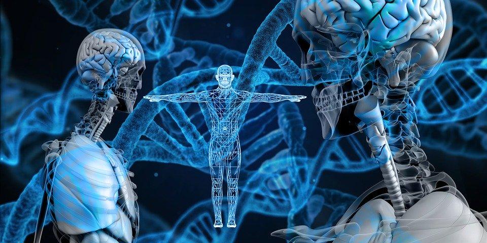 How to determine Traits through Genetics