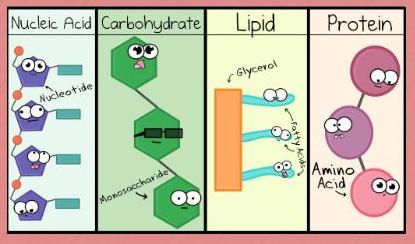 Meet the Macromolecules