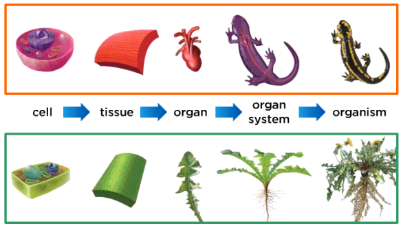 Types of Tissues