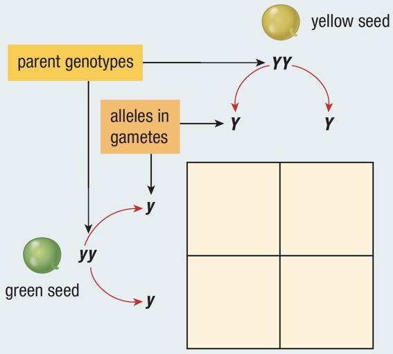 Inheritance and Hybrid Crosses